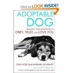 Adoptable Dog Teaching Your Adopted Pet to Obey, Trust