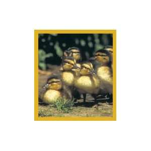 New Magnetic Bookmark Ducklings High Quality Modern Design