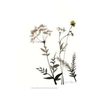 Watermark Wildflowers IX by Jennifer Goldberger 13x16
