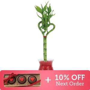 Heart Shaped Lucky Bamboo Valentines Package   Free Candy