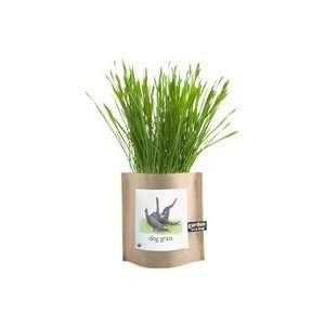 Grow Your Own Dog Grass Garden in a Bag Grocery & Gourmet Food