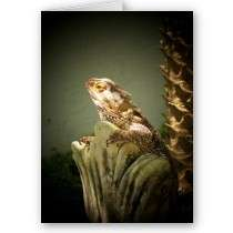 Bearded Dragon Greeting Cards, Bearded Dragon Note Cards